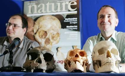 Henry Gee y Christopher Stringer con los cráneos del Hominido de Flores.