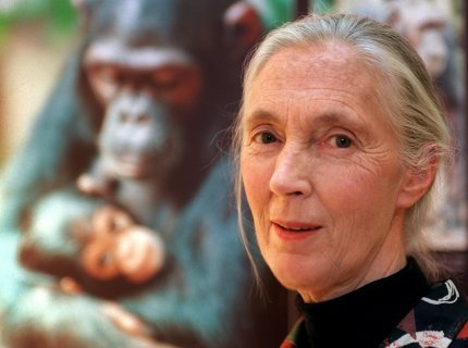 Jane Godall, una de las primatólogas mas importantes de todos los tiempos