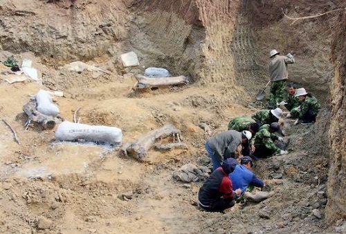 El mayor fósil de hidrosaurio del mundo fue descubierto en el mismo lugar en los años 80 del siglo pasado, y expuesto en el museo local.