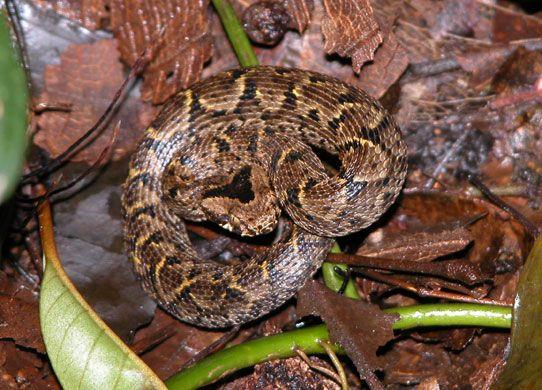 También se han descubierto nuevas especies de serpientes