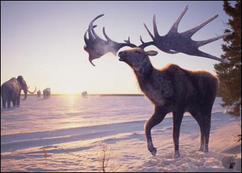 Las 10 especies extintas que la ciencia podría resucitar