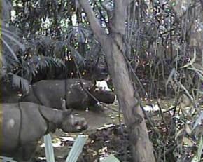 Una captura del video de WWF