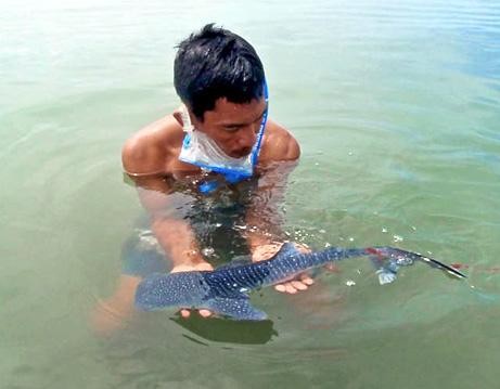 El animal fue salvado de una redes de pesca