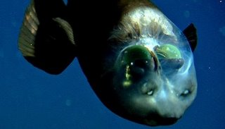 Las bolsas verdes del interior del cráneo son sus ojos.