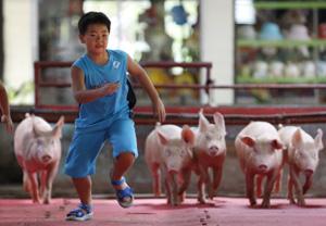 Conspiraciones absurdas en torno a la gripe porcina. Foto El Confidencial