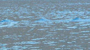 Una de las fotografías en el lago