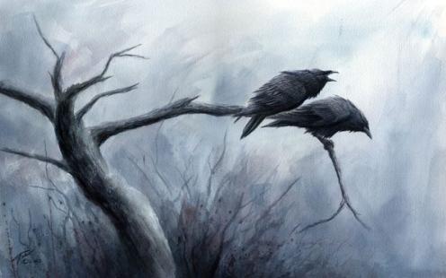 Los cuervos han triplicado su número en la zona