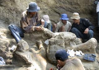 Los arqueólogos limpian la osamenta