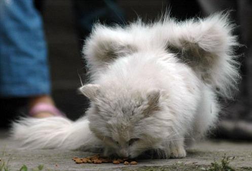 El gato apenas tiene poco más de un año de edad / PHOTOGRAPHY BY CHINA FOTO PRESS