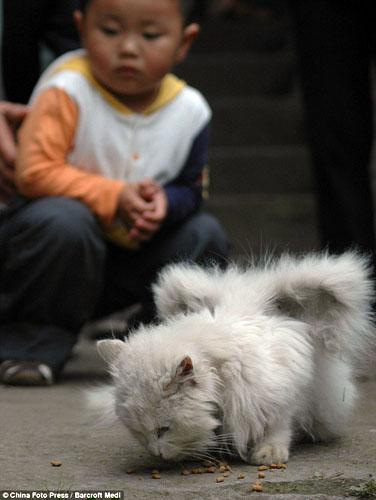 El gato esta sano y no parece tener ninguna enfermedad / PHOTOGRAPHY BY CHINA FOTO PRESS