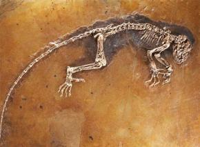 Los restos de un primate de hace 47 millones de años, han sido descubiertos en Alemania. Se trata de un esqueleto bastante completo que recibe el nombre de Darwinius masillae y es 20 veces más antiguo que los fósiles que son clave para explicar la evolución humana.