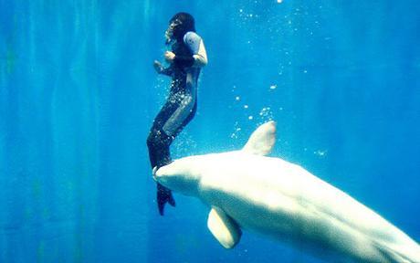 Momento en que la Beluga salva a la buceadora
