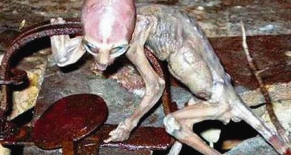 ¿Una imagen del supuesto alien cuando estaba vivo?