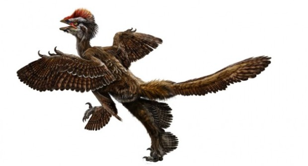 anchiornis-artist