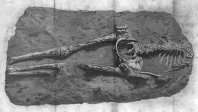 Uno de los esqueletos incrustado en la losa de piedra