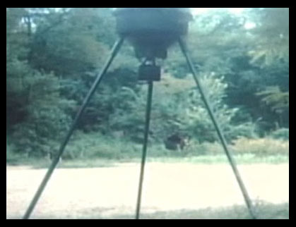 La imagen del animal desconocido captado en Kentucky