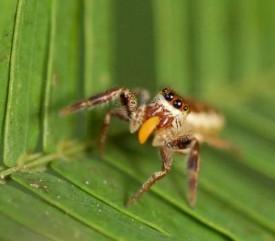 A las hormigas no les cae simpático que coma la planta que tanto trabajan por cuidar.