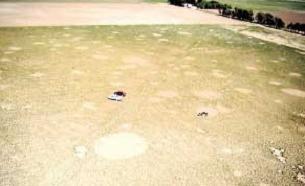 Imagen de los extraños círculos aparecidos en el cultivo.