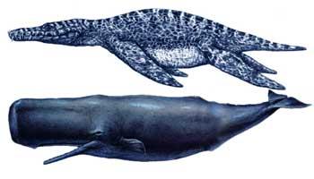 liopleurodon2