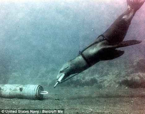 Los leones son entrenados para desactivar minas submarinas