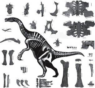 Therizonosaurio