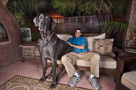 El perro mas alto del mundo Perro_1