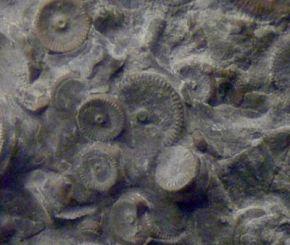 Imagen del fósil descubierto
