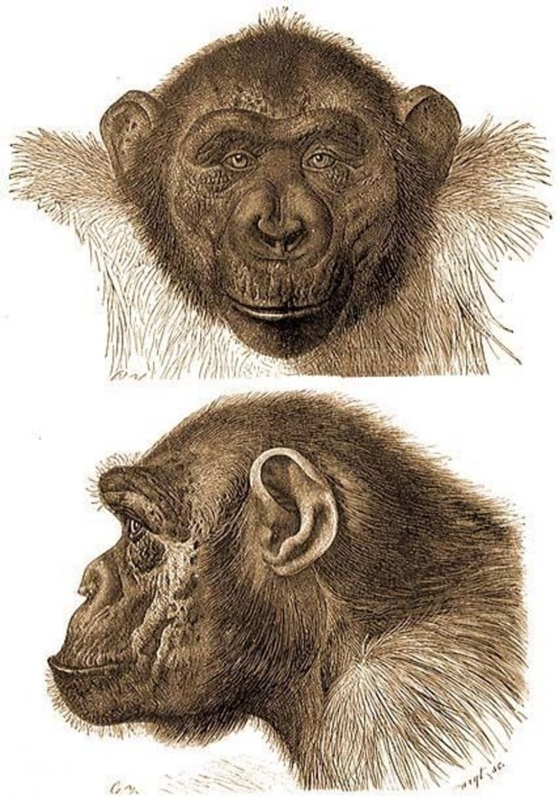 Koolookamba Mafuka, 2 views of face and head