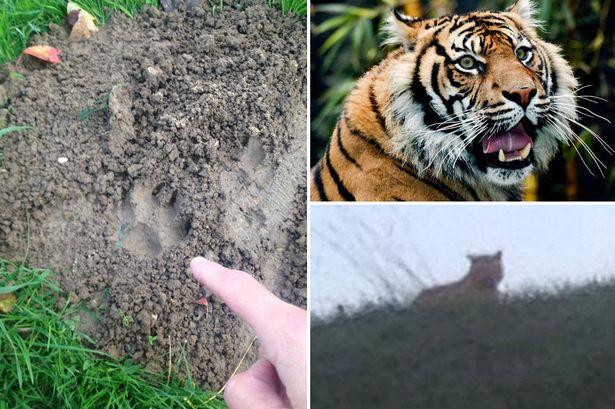 tiger-print-main