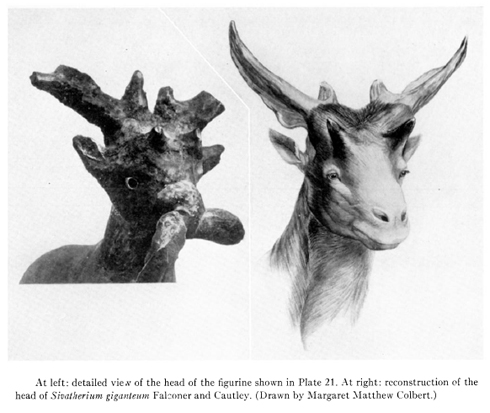 i-da1ef8770995866875862afdd2ac053d-Colbert-1936-Kish-figurine-compared-with-Sivatherium