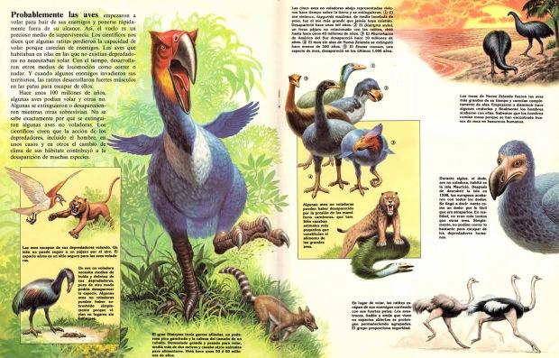 _zoobooks-antepasados-de-las-aves-corredoras